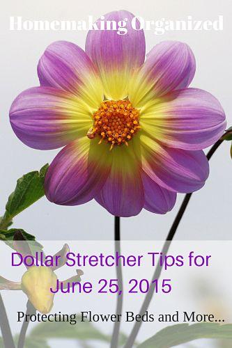 Dollar Stretcher Tips for June 25, 2015