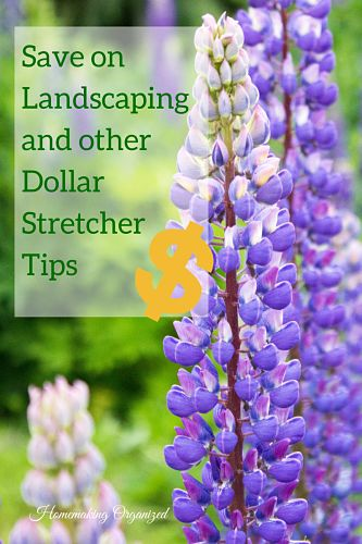 Save on Landscaping and other Dollar