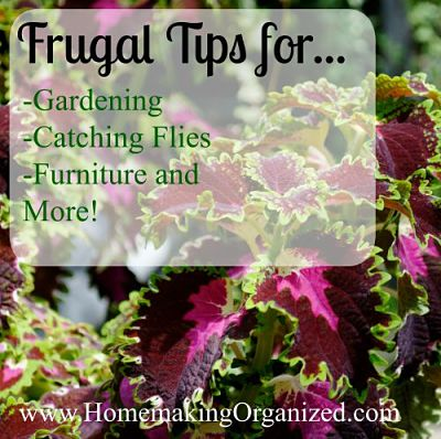 frugal-tips-august-27_opt