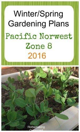 winter-spring-gardening-zone8-2016